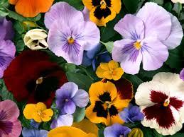 ~冬のガーデニング♪ おすすめの花ランキング~